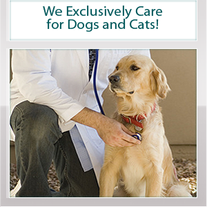 Dog Vet - Temple Hills, MD - Al-Lynn Animal Hospital - We Exclusively Care for Dogs and Cats!