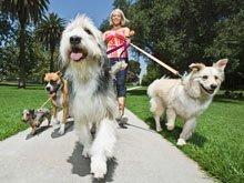 pet grooming - Wellington, FL - Puppy Love Dog Grooming