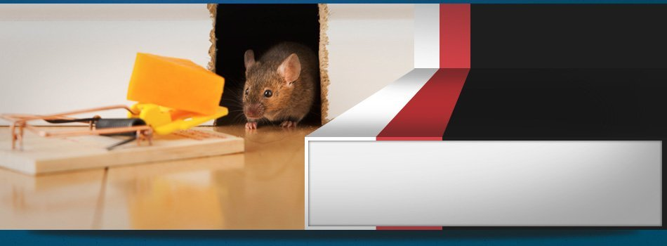 Rodent Control | Riley, MI | Leo's Pest Control | 810-523-9295