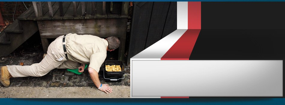 FHA & VA Pest Inspections | Riley, MI | Leo's Pest Control | 810-523-9295