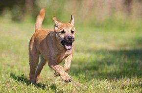 Dog Bites and Attacks | Delray Beach, FL | Craig D Earnhart | 561-265-2220