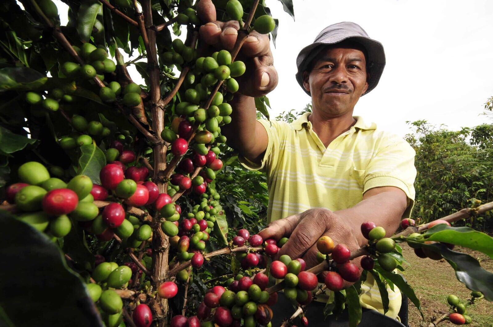 Coffee farmer
