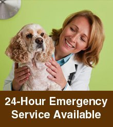 Veterinary Services - Albany, IN - Albany Veterinary Clinic LLC