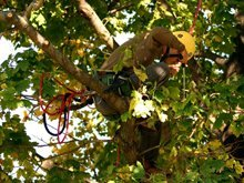 Tree Care Services - Greenville, IL - Mains Tree Service Inc. - tree trimming