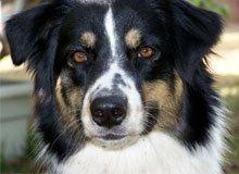 Dog Grooming - Burbank, CA - Joyce's Grooming Studio