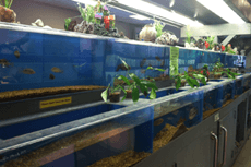 Exotic Life Fish & Reptiles - Fish | Reptiles Photos - Chatsworth, CA