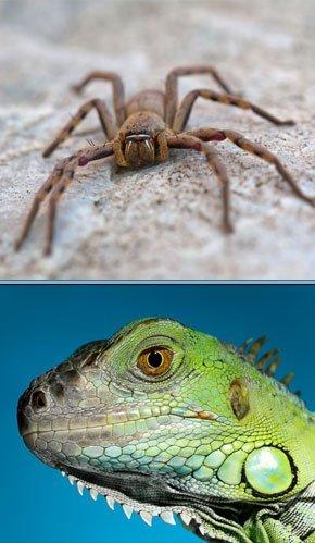 Reptile Terrarium Feeders - Chatsworth, CA - Exotic Life Fish & Reptiles