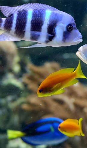 Freshwater Saltwater Fish - Chatsworth, CA - Exotic Life Fish & Reptiles