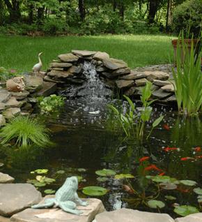 Koi Fish Pond Supplies - Chatsworth, CA - Exotic Life Fish & Reptiles