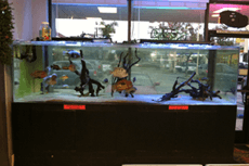 Chatsworth, CA - Exotic Life Fish & Reptiles - Fish | Reptiles Photos