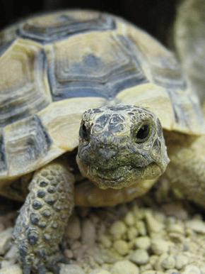 Fish Reptile Pet Store - Chatsworth, CA - Exotic Life Fish & Reptiles