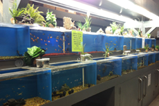 Fish | Reptiles Photos - Exotic Life Fish & Reptiles - Chatsworth, CA