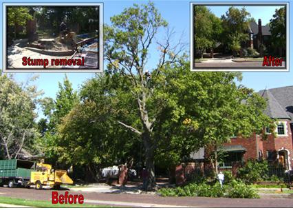 Tree Service - Wichita, KS - American Tree Specialist