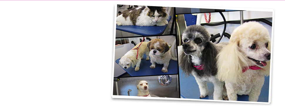 Collage of groomed pets
