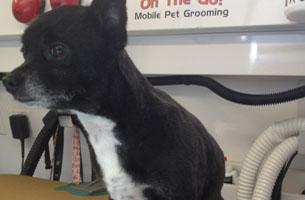 Pet Grooming | Long Beach, CA | Groomer Gal On The Go | 562-331-3909