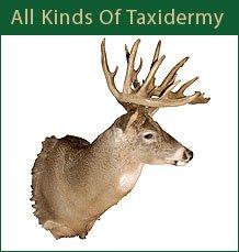 Taxidermy Services - Elk River, MN - Rich's Taxidermy