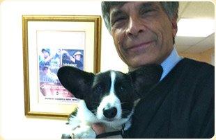 Pet Dentistry | Stuart, FL | Boulevard Animal Hospital | 772-781-1118