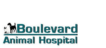 Veterinary Services | Stuart, FL | Boulevard Animal Hospital | 772-781-1118
