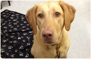 Pet Eye Care | Stuart, FL | Boulevard Animal Hospital | 772-781-1118