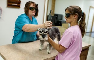 Dog with shades being checked
