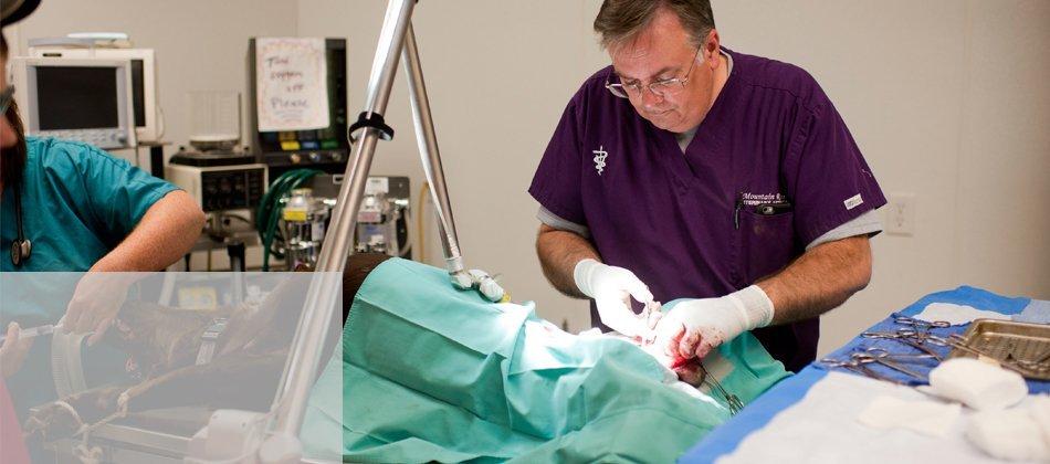 Veterinarian doing surgery