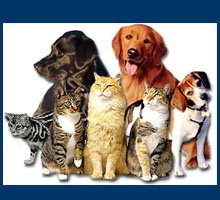 Veterinarians - Logansport, IN - Cass County Animal Hospital Inc