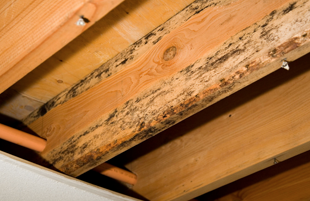 Molds and water leaks on wood