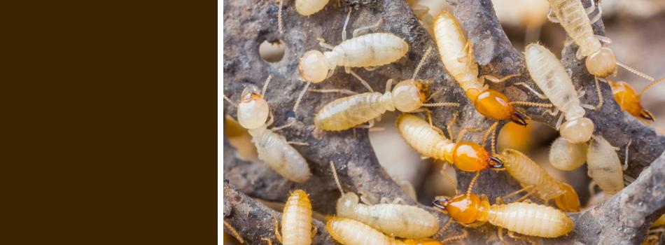 A termite colony