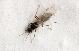 A termite on wall