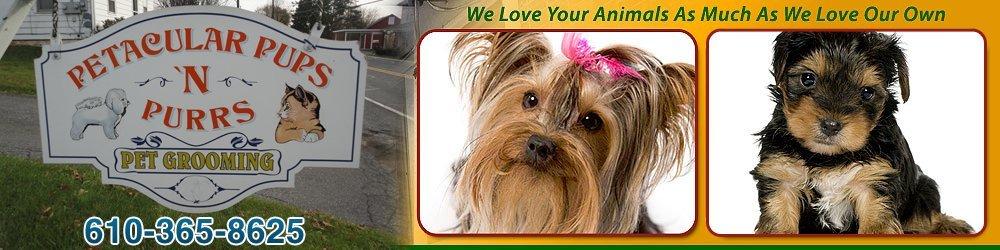 Grooming Nazareth, PA - Petacular Pups-N-Purrs 610-365-8625
