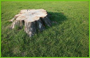 Stump Removal | Avon Lake, OH | Tomco Tree Service | 440-933-8733
