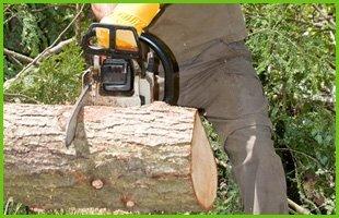 Storm Damage | Avon Lake, OH | Tomco Tree Service | 440-933-8733