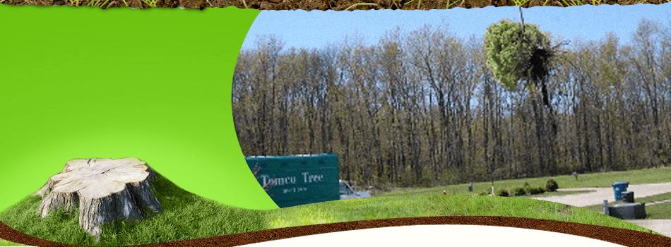 Tree Service | Avon Lake, OH | Tomco Tree Service | 440-933-8733