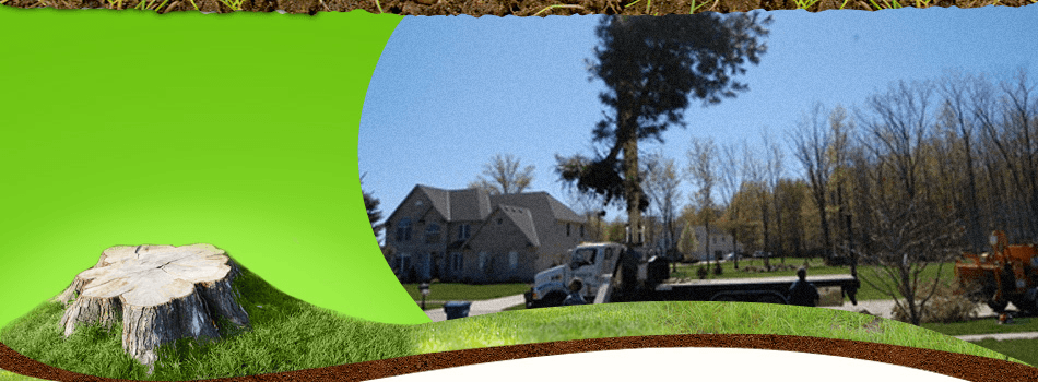 Tree Service | Avon Lake, OH | Tomco Tree Service | 440-933-8733