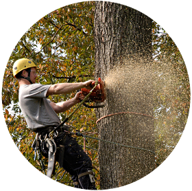 legal process for removing trees