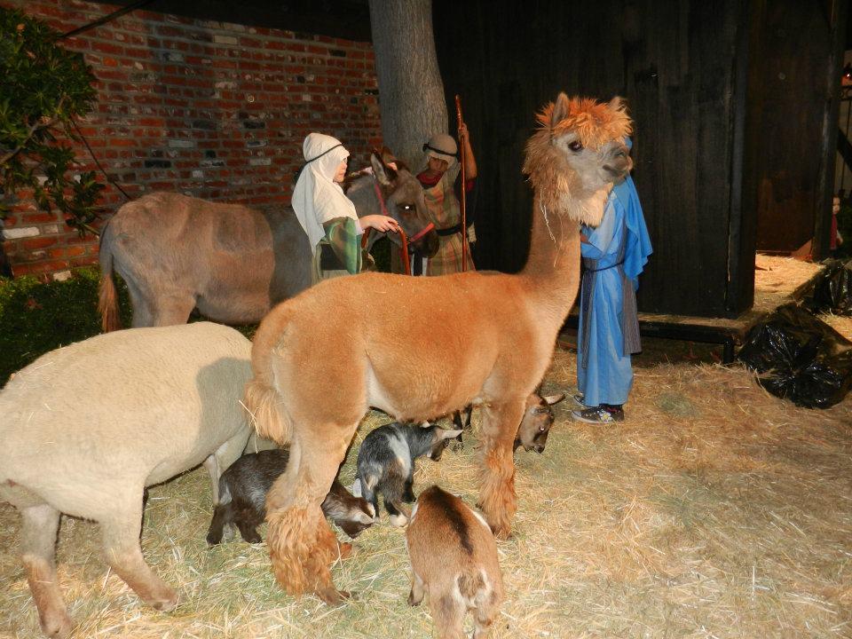 Pony Pals Services