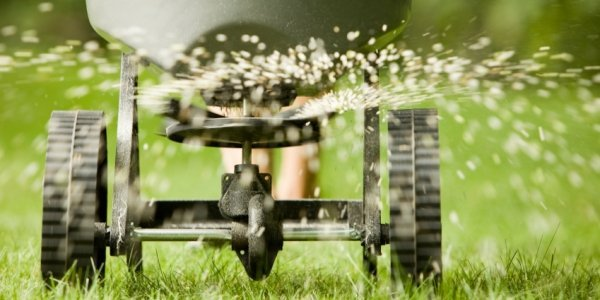 lawn over-seeding