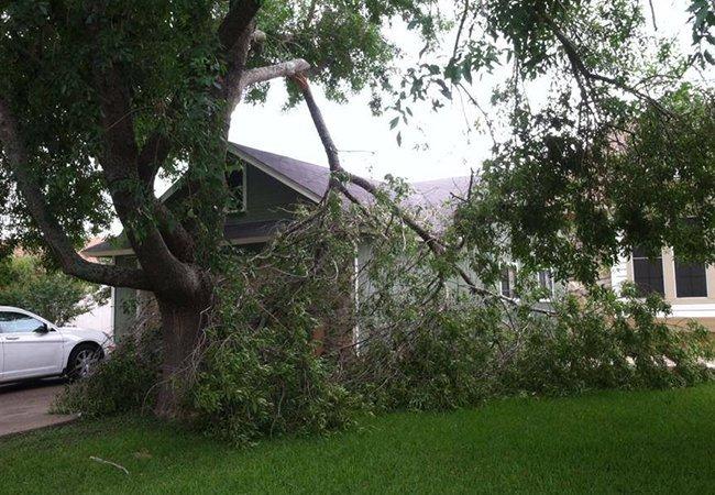 Storm-damaged tree
