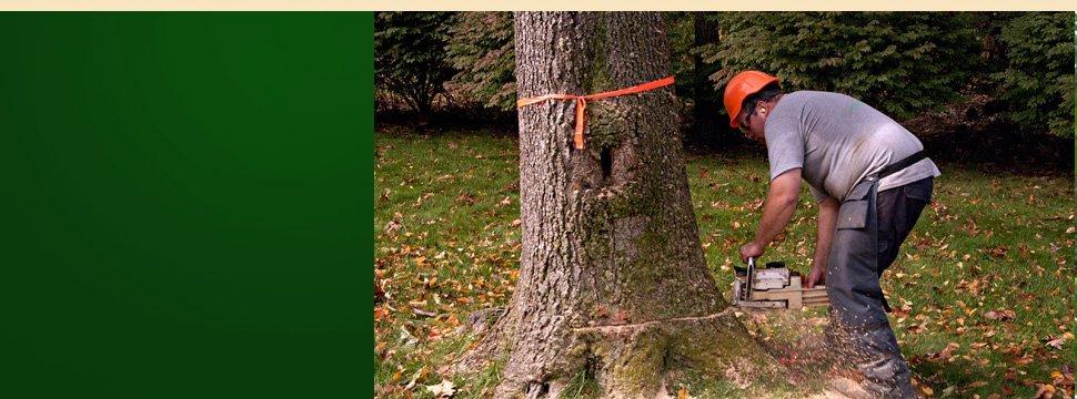 tree removal | Schenectady, NY | Harmony Tree Service | 518-355-4700