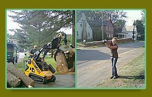 tree timming | Schenectady, NY | Harmony Tree Service | 518-355-4700