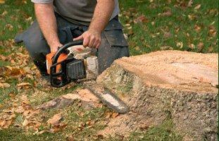 stump removal | Schenectady, NY | Harmony Tree Service | 518-355-4700