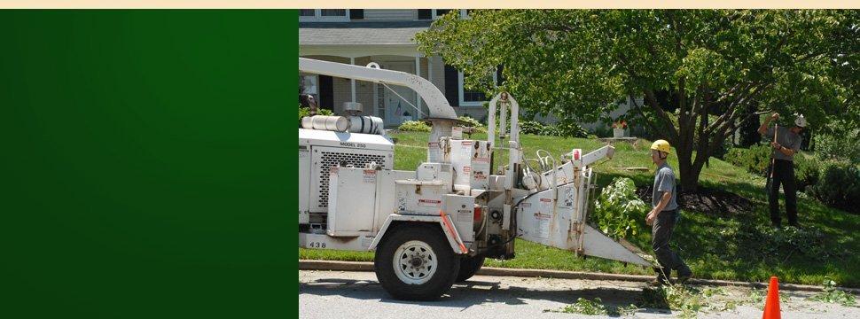many more tree services | Schenectady, NY | Harmony Tree Service | 518-355-4700