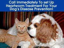 Veterinary - Denton, TX - Dr. Nathalia Adams DVM - Cat and dog - Call Immediately To set Up Heartworm Treatment For Your Dog's Disease Prevention!