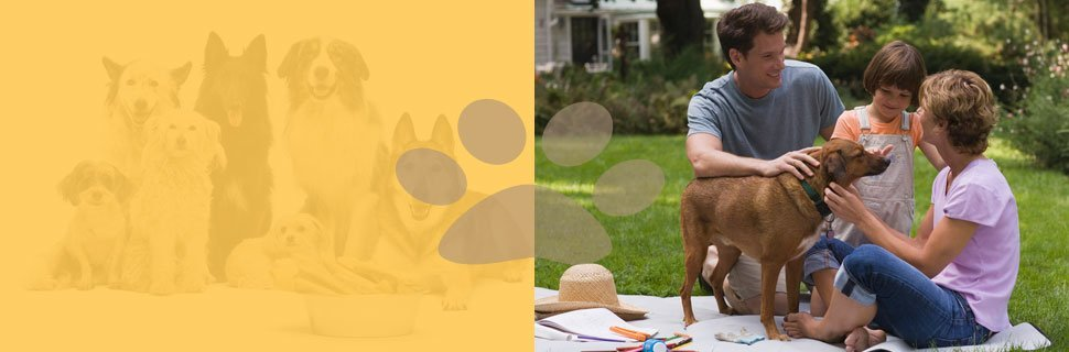 Dog Behavior Training | Knoxville, TN | Dog Training In Your Home | 865-692-1221