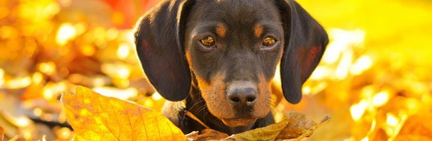 Housebreaking Training | Knoxville, TN | Dog Training In Your Home | 865-692-1221