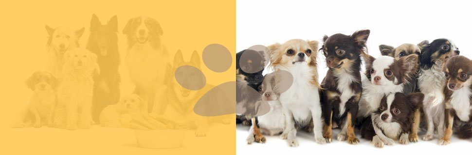 Obedience Training | Knoxville, TN | Dog Training In Your Home | 865-692-1221