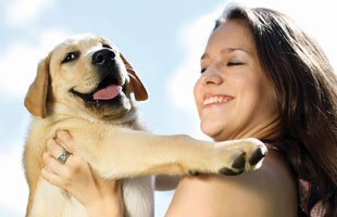 Puppy Trainer | Knoxville, TN | Dog Training In Your Home | 865-692-1221