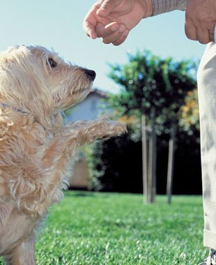 Dog Behavior Modification | Knoxville, TN | Dog Training In Your Home | 865-692-1221