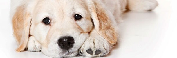 Dog Anxieties | Knoxville, TN | Dog Training In Your Home | 865-692-1221