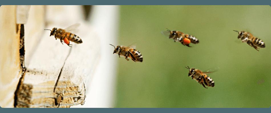 Pest control | Elmwood Park, NJ | A-Apache Animal & Pest Services | 201-791-4333